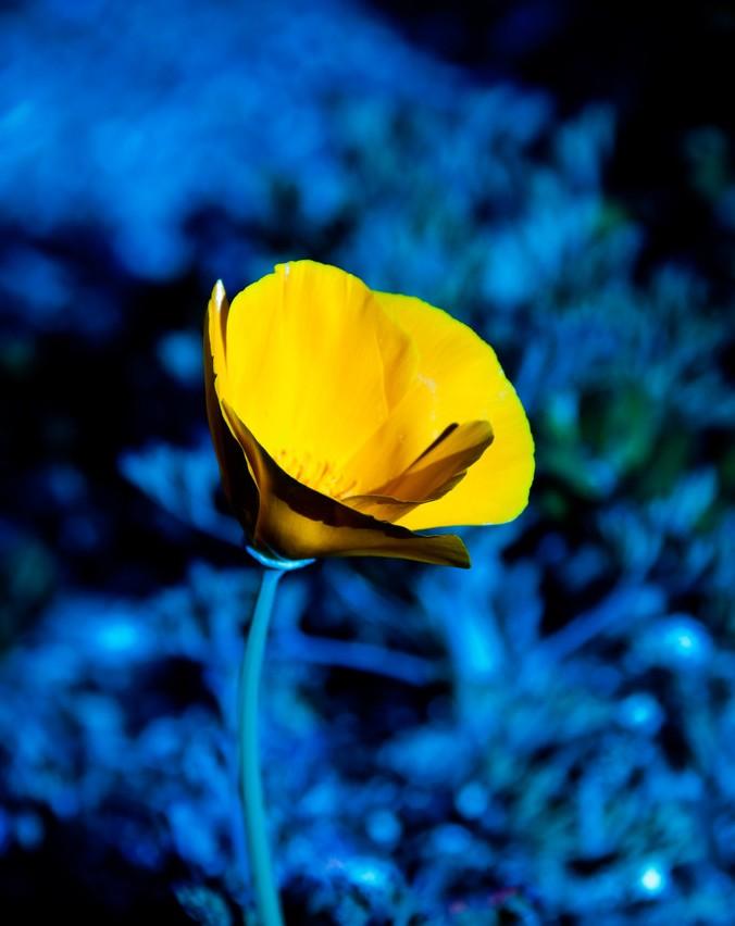 qq头像花朵天蓝色