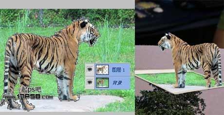 ps合成演播厅生动的微型立体动物世界讲解桌面效果