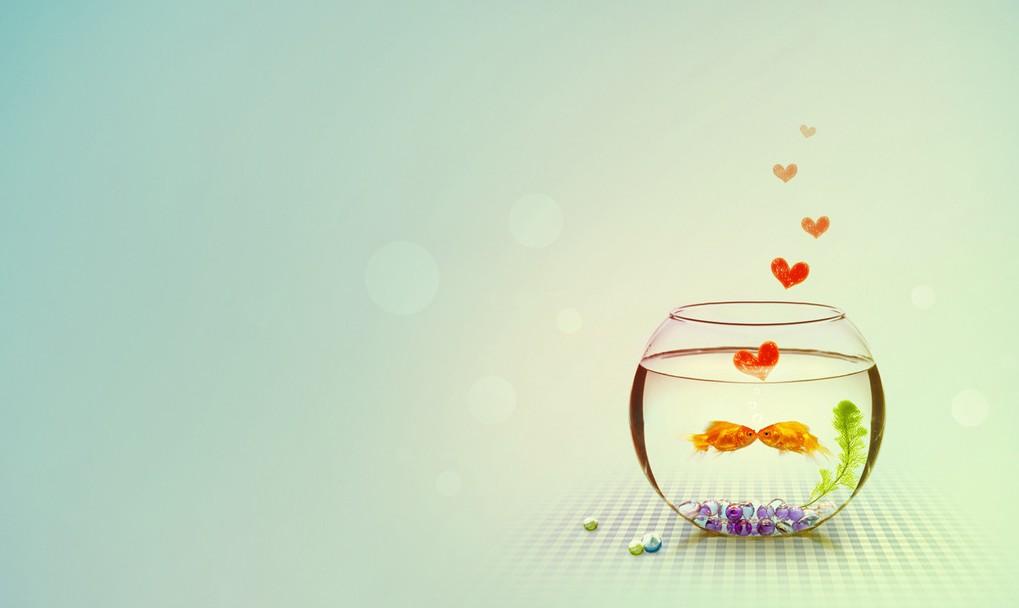 金鱼缸图片_素材图片_ps教程