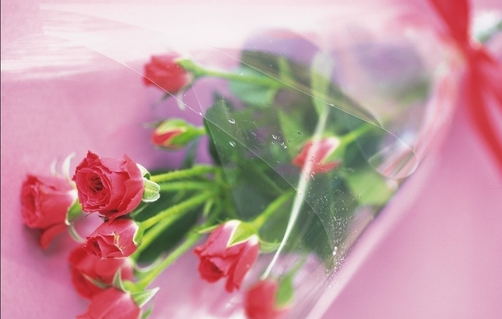 高清鲜花摄影图片_素材图片_ps教程