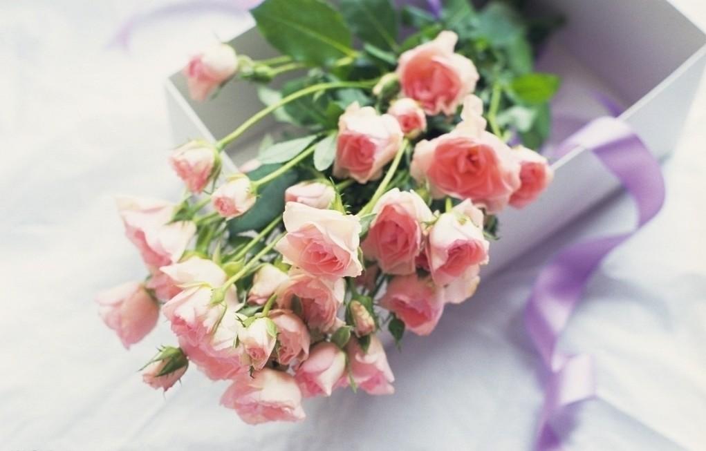 高清鲜花摄影图片_素材图片