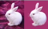 利用PS滤镜抠出毛茸茸的白兔