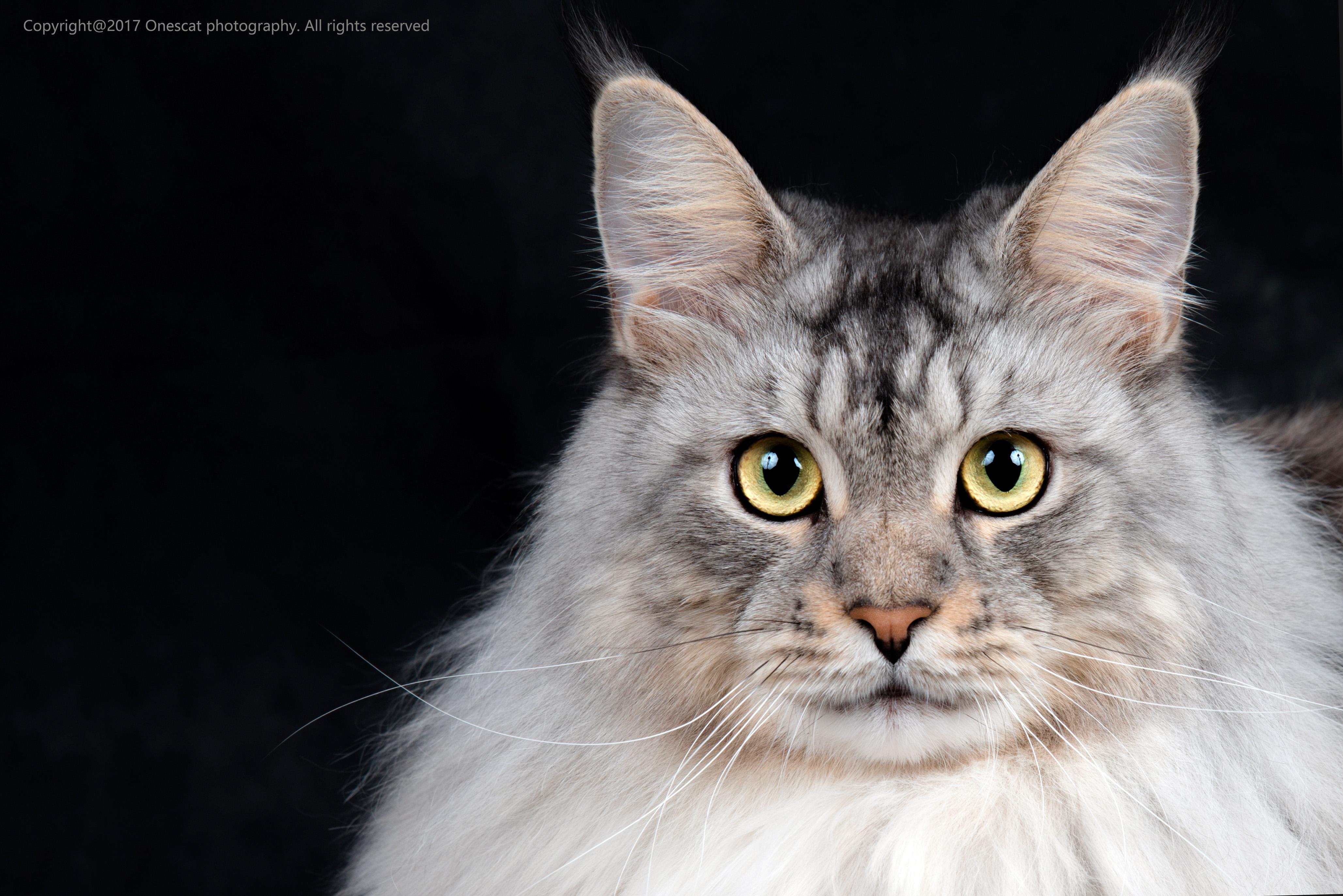 猫眼睛可爱瞳孔放大